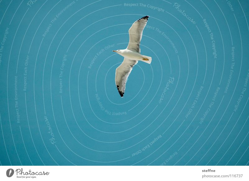 Sky White Ocean Blue Summer Black Loneliness Air Bird Coast Aviation Dangerous Feather Wing Discover Airplane landing
