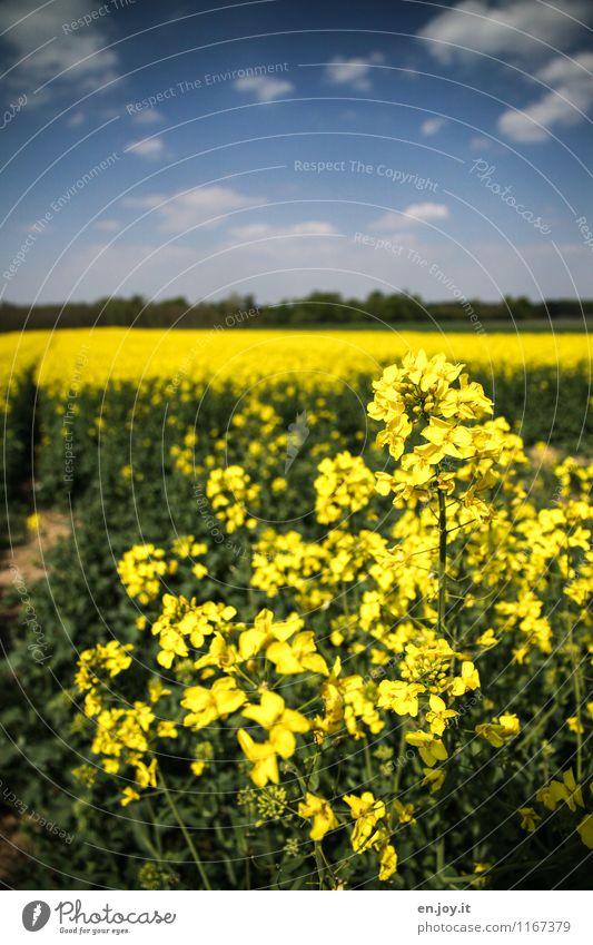 Sky Nature Vacation & Travel Plant Summer Landscape Clouds Healthy Eating Environment Yellow Blossom Spring Horizon Field Growth Nutrition