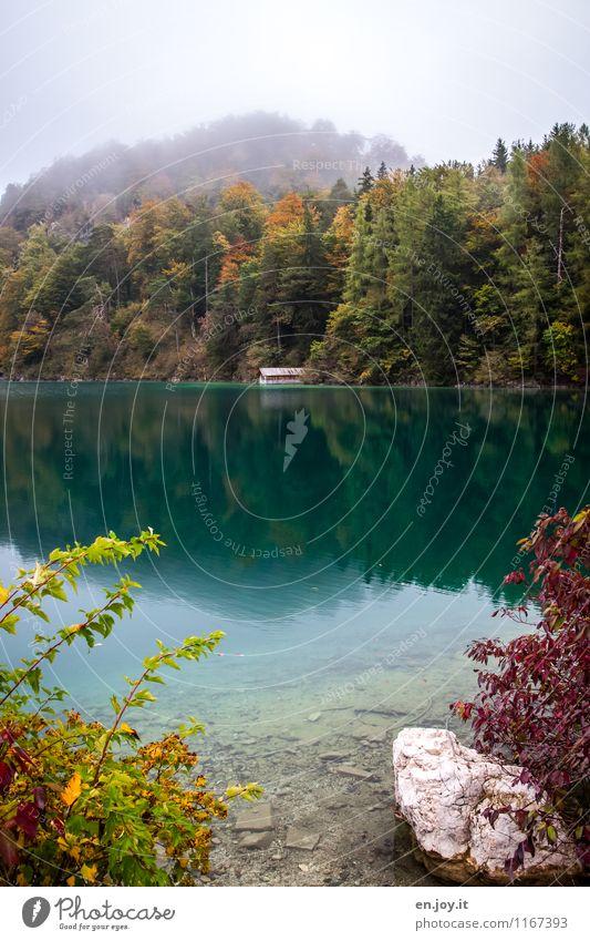 Sky Nature Vacation & Travel Plant Landscape Calm Forest Environment Sadness Autumn Lake Germany Fog Tourism Bushes Trip