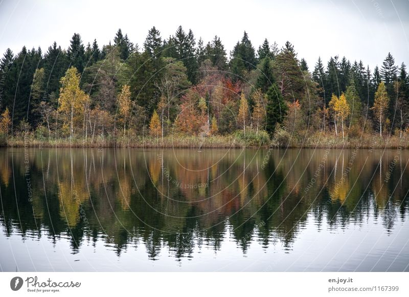 Symmetrical Vacation & Travel Environment Nature Landscape Plant Sky Autumn Forest Lake Romance Serene Calm Hope Belief Sadness Grief Idyll Climate Symmetry