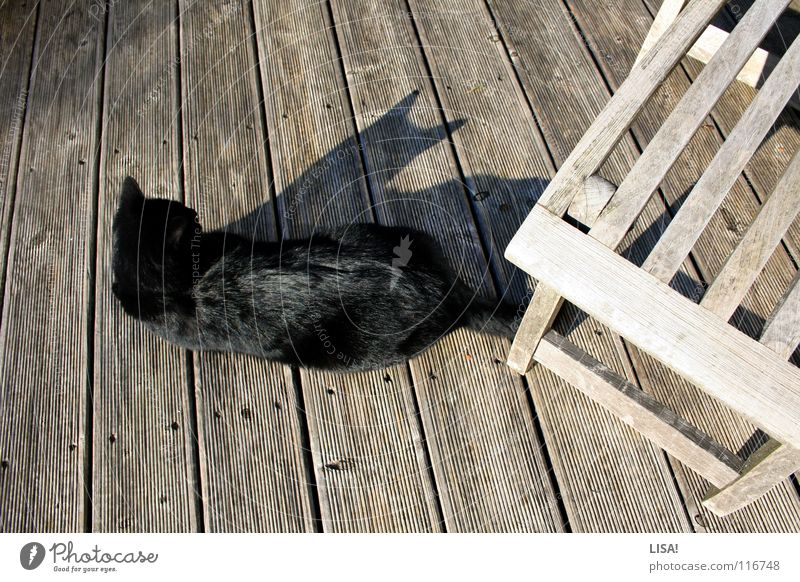 fur on wood Colour photo Exterior shot Structures and shapes Shadow Silhouette Contentment Calm Summer Sun Animal Terrace Pelt Cat Wood Glittering Jump Simple