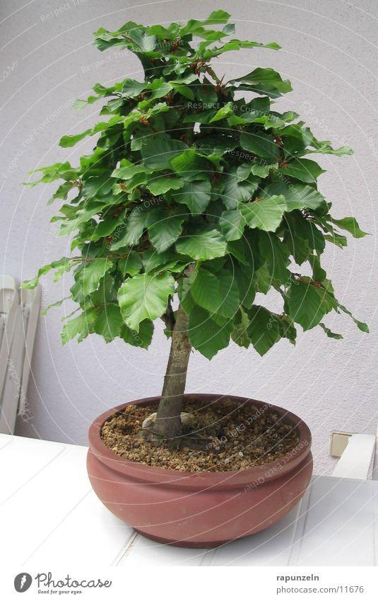 Tree Flowerpot
