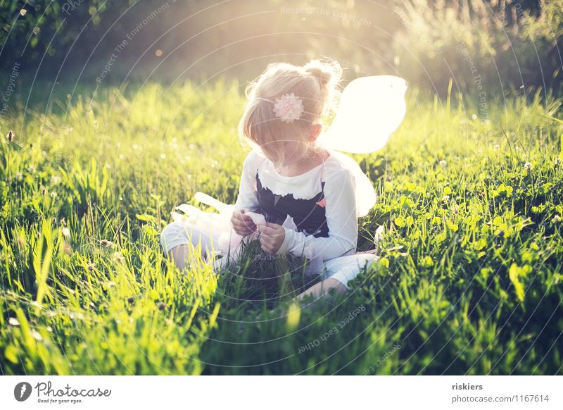 fairy summer Human being Feminine Child Girl Infancy 1 3 - 8 years Environment Nature Plant Summer Beautiful weather Meadow Field Think Discover Relaxation