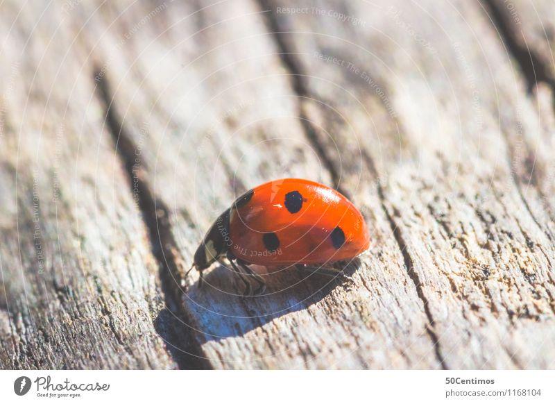 ladybugs Animal Wild animal Ladybird Beetle 1 Going Happy Wooden table Colour photo Detail Macro (Extreme close-up) Deserted