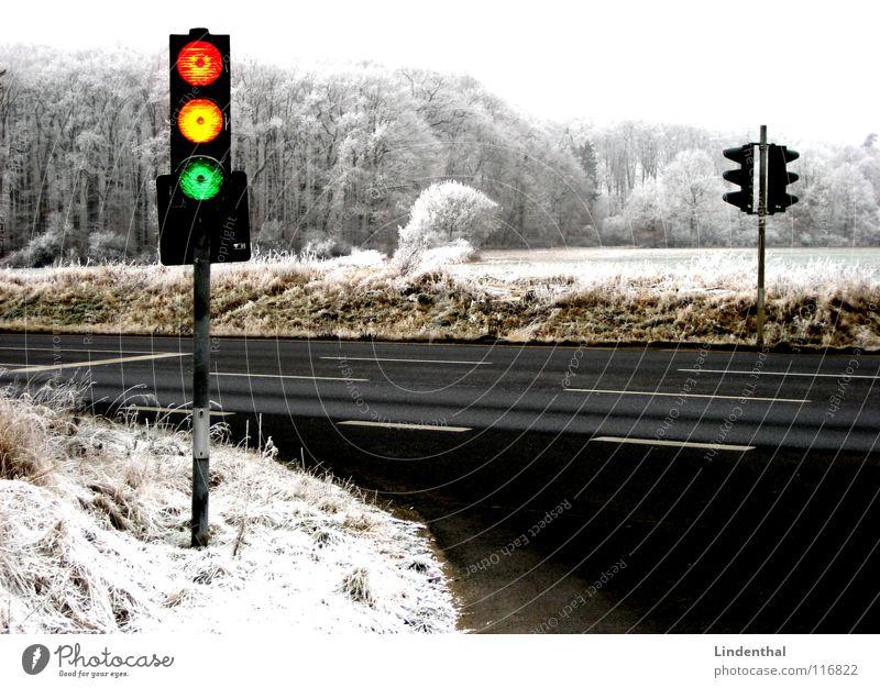 Green Red Winter Yellow Street Forest Snow Landscape Orange Funny Transport Crazy Traffic light Hoar frost