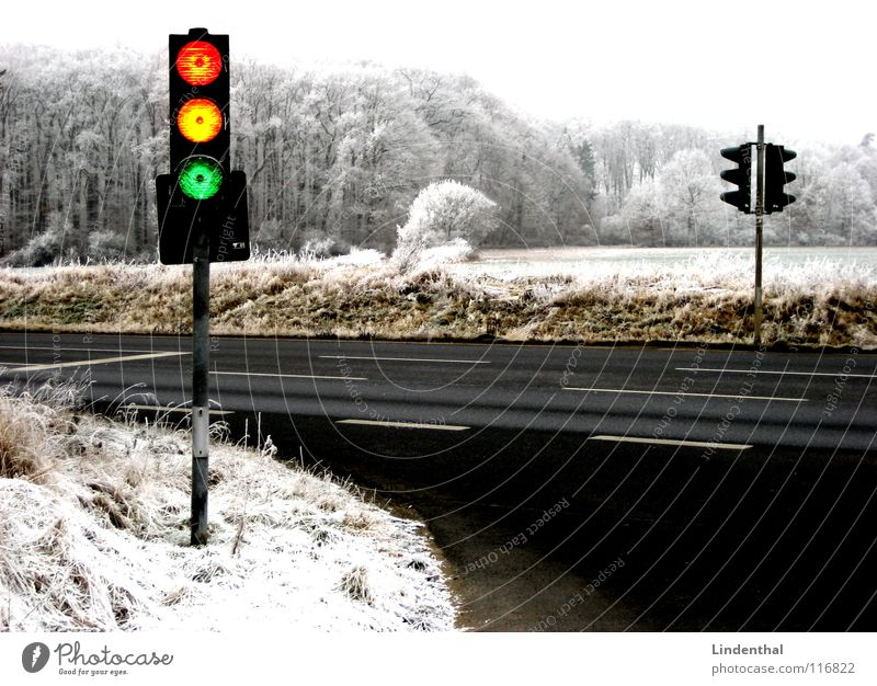traffic light Red Yellow Green Traffic light Winter Forest Multicoloured Transport Crazy Orange Snow Street Hoar frost Contrast Landscape crackers Funny amp