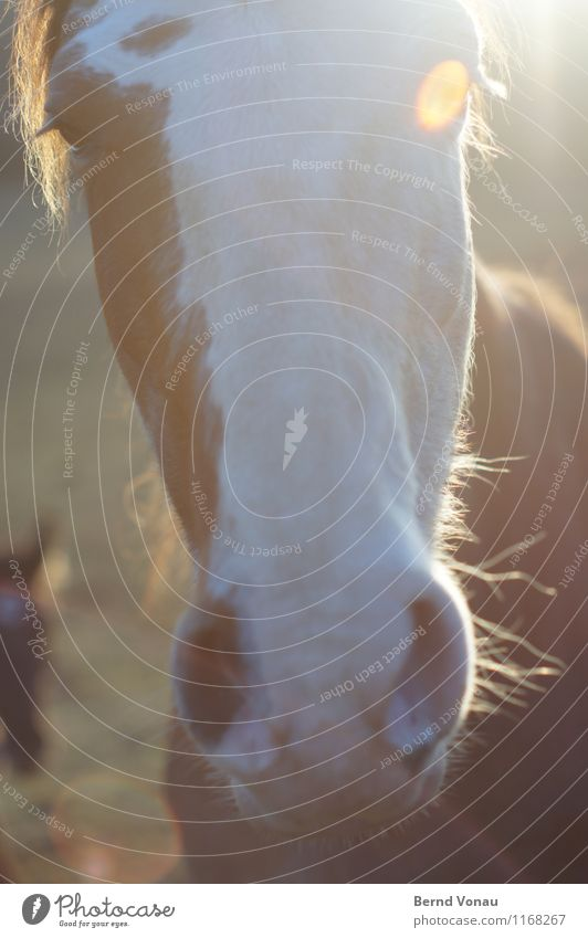 Sun Animal Eyes Hair and hairstyles Brown Friendliness Curiosity Near Horse Pelt Eyelash Aperture Nostrils