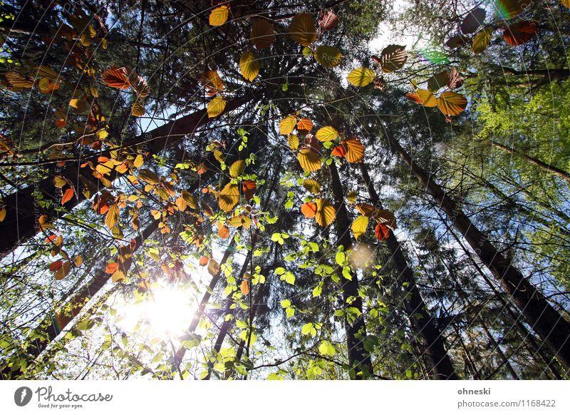walk in the woods Nature Landscape Sun Sunlight Spring Beautiful weather Plant Tree Leaf Tree trunk Forest Multicoloured Green Joie de vivre (Vitality)