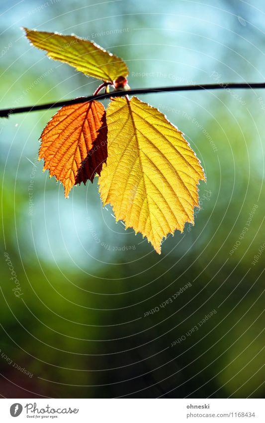 Tree Leaf Life Spring Autumn Natural Joie de vivre (Vitality) Warm-heartedness Spring fever Beech tree Beech leaf