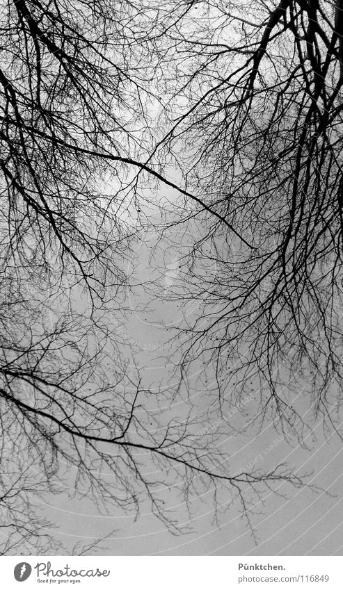 algere (lat.) Forest Cold Freeze Winter Winter sky Gray Black Headstrong Winter walk Clouds Bad weather Sky Branch look up in the air Twig