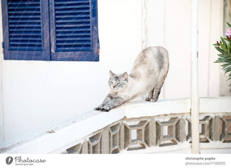 Cat makes the dog Yoga Animal Pet 1 Movement Bright Cute Sports Stretching Distend Wake up Colour photo Exterior shot Deserted Copy Space top Day