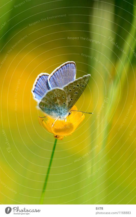 Joy Animal Emotions Moody Contentment Joie de vivre (Vitality) Butterfly Spring fever