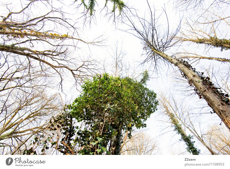 Up in the sky Environment Nature Landscape Earth Spring Beautiful weather Tree Bushes Forest Esthetic Fresh Gigantic Infinity Sustainability Natural Green
