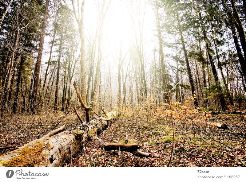 woid Environment Nature Landscape Sun Sunlight Autumn Beautiful weather Tree Bushes Forest Fresh Sustainability Natural Yellow Green Loneliness Energy