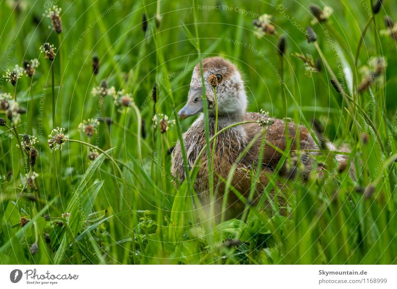 Nature Plant Green Relaxation Landscape Animal Environment Baby animal Spring Meadow Grass Happy Gray Brown Bird Dream