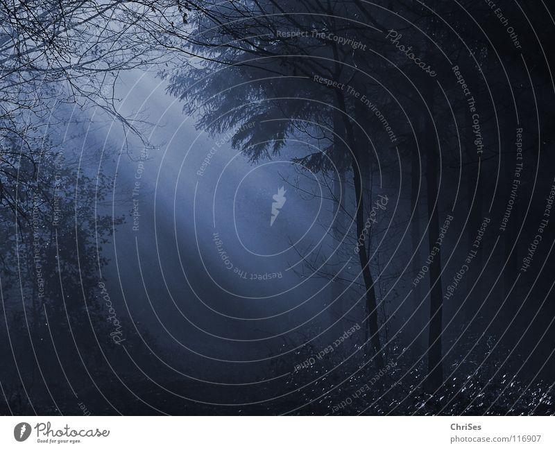Blue Tree Winter Leaf Forest Dark Landscape Autumn Cold Gray Lighting Fog Beginning Romance Mysterious Tunnel