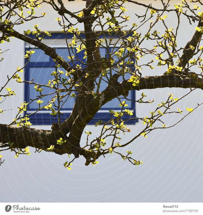 City Blue Tree Leaf House (Residential Structure) Window Wall (building) Spring Wall (barrier) Garden Facade Park Living or residing Branch Village Town