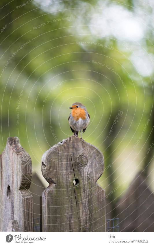 lookout Bird Robin redbreast Nature Sit Looking Vantage point Deserted