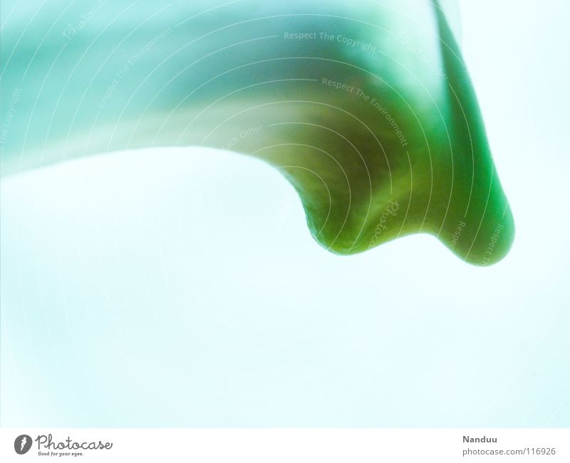 modern home design White Light blue Green Abstract Background picture Curved Exceptional Strange Macro (Extreme close-up) Blossom Flower Orchid Obscure Bright