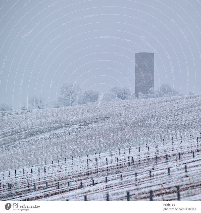 iceberg Vineyard Ruin Line (row of words) Wire Kiedrich Rheingau Cold Frozen Ice Hoar frost Fog Gloomy Gray Ice crystal Attract Winter Tree Confectioner`s sugar