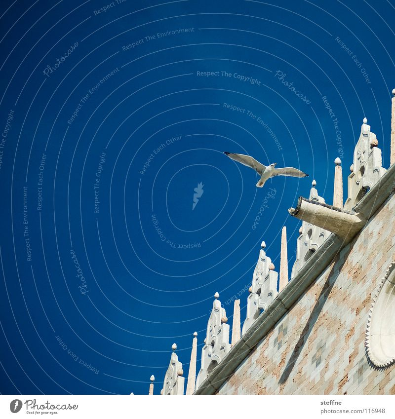Seagull II: The Stalk Bird Black White Aerodynamics Summer Feather Investigation Discover Circle Airy Gull birds Black-headed gull  Palace Palace of Doge Venice