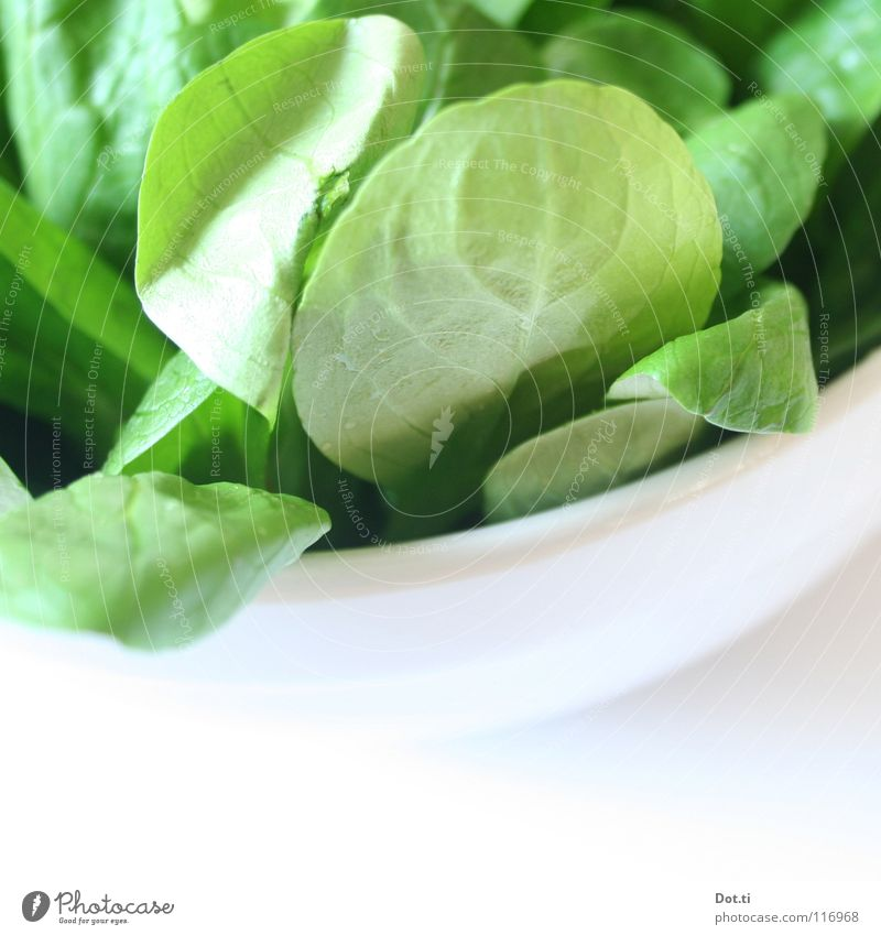 100 g 2,99 € Food Lettuce Salad Nutrition Organic produce Vegetarian diet Diet Crockery Bowl Healthy Fresh Bright Delicious Green White Appetite Quality