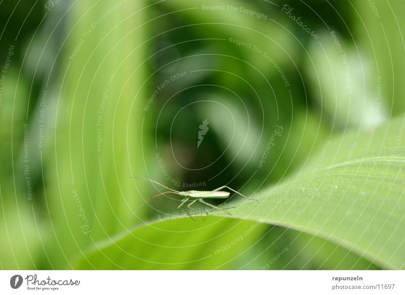 Nature Leaf Field Insect Maize