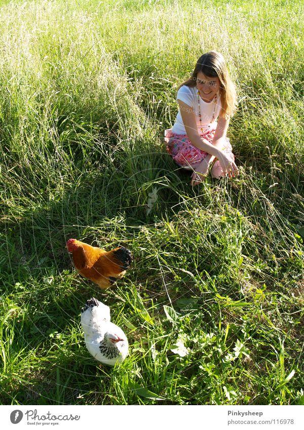 Rooster in basket Barn fowl Green Meadow White Summer Girl Animal Basket Grass Juicy To enjoy Exterior shot Air Brown Playing Woman Bird Orange Freedom