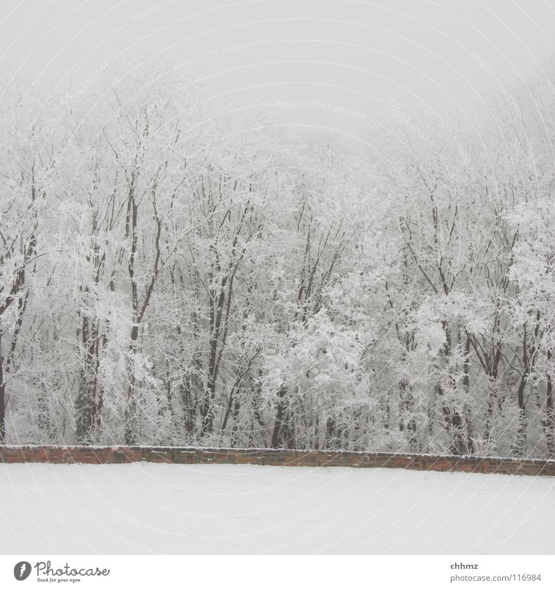 frost Winter White Ice Hoar frost Forest Park Fog Loneliness Tree Horizontal Structures and shapes Flat Cold Unicoloured Wall (barrier) Frost Smoothness