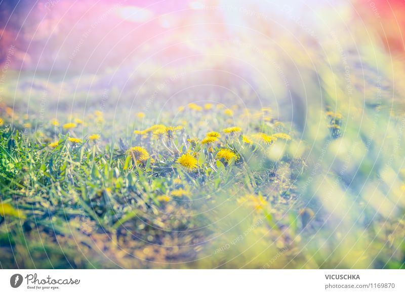 Nature Plant Summer Sun Flower Landscape Joy Environment Yellow Spring Meadow Style Garden Moody Earth Park