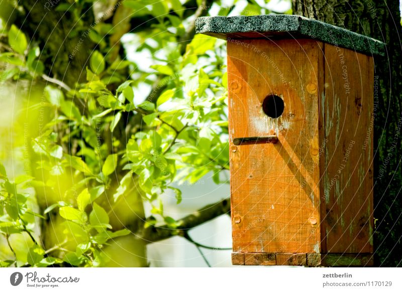 Bird X Birdhouse Nesting box strong box Wood Hollow Flat (apartment) Nature Animal protection Environmental protection Love of animals Empty flown out Spring