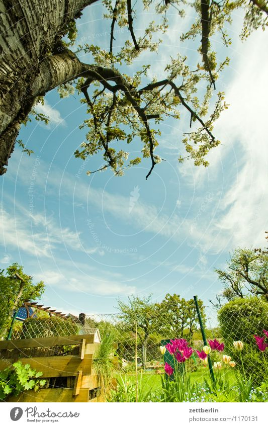 Sky Summer Tree Relaxation Flower Calm Clouds Blossom Spring Meadow Small Garden Idyll Copy Space Branch Lawn