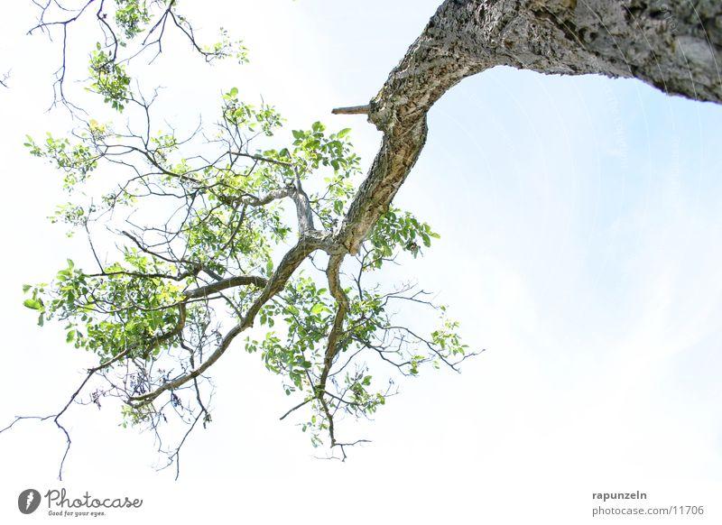 Sky Tree Blue Leaf Clouds Branch Tree bark Branchage