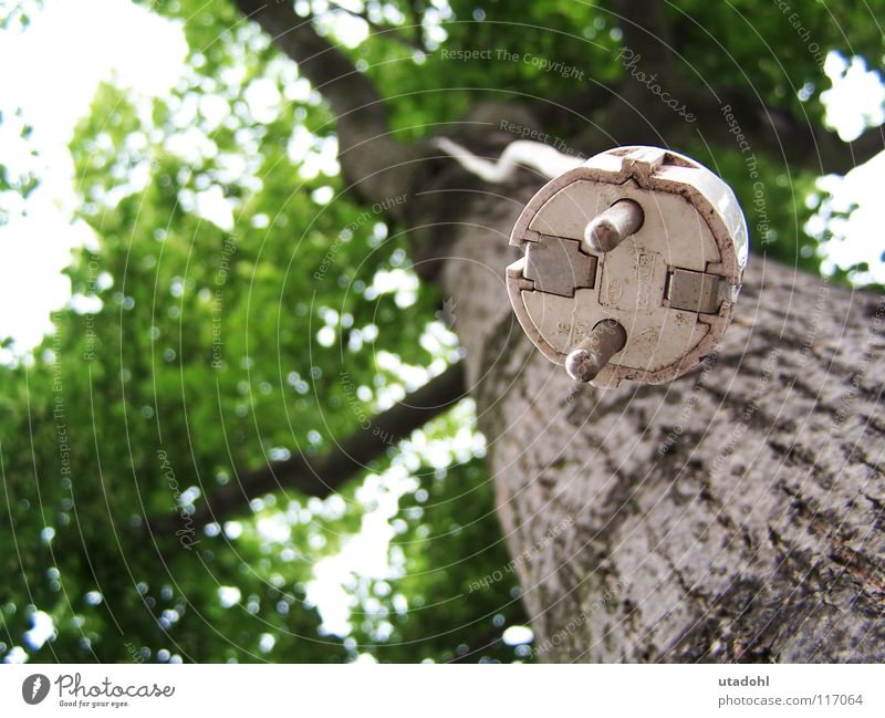 Tree Green Summer Leaf Funny Electricity Branch Obscure Hang Treetop Ecological Twig Tree bark Connection Connector Renewable energy