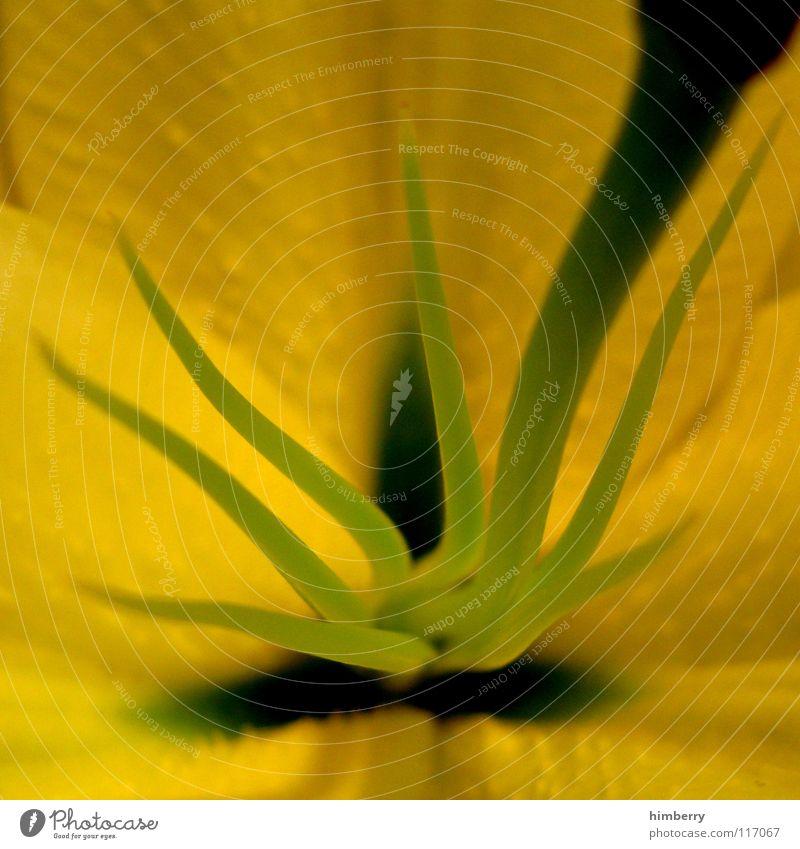 Nature Flower Plant Summer Yellow Blossom Spring Fresh Growth Botany Pistil Blossom leave