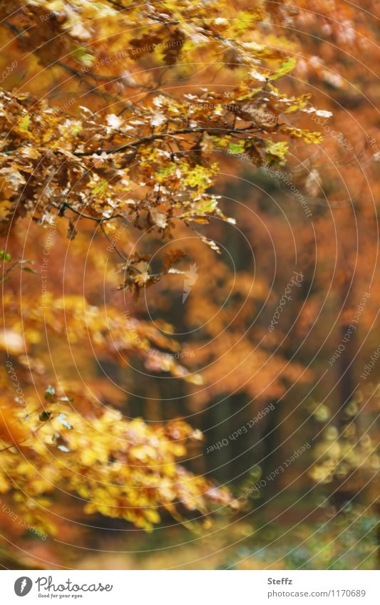 autumnal impression Automn wood forest bath Autumn leaves Autumnal colours October golden october autumn impression Domestic Picturesque Poetic Indefinite Calm