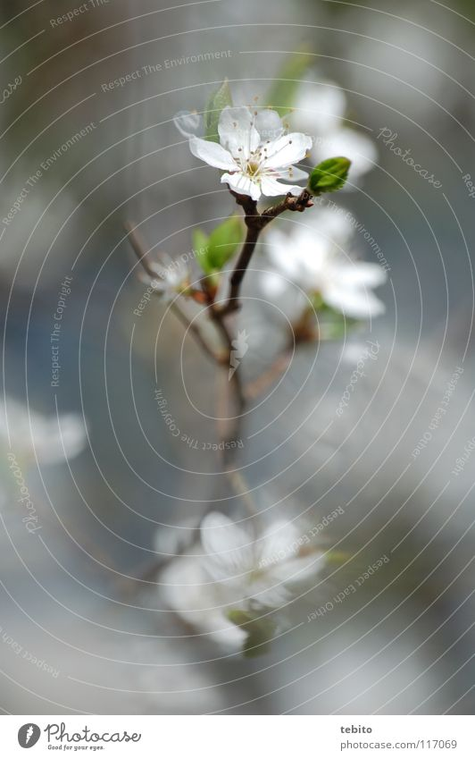 Nature Flower Plant Blossom Spring Wake up Blossom leave Stamen Nectar