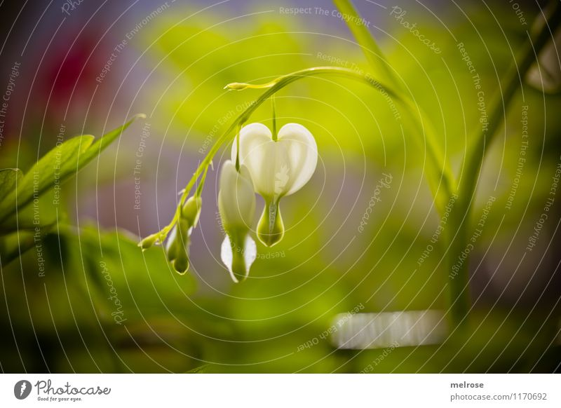 Nature Plant Beautiful Green White Relaxation Flower Red Leaf Love Blossom Spring Emotions Style Garden Illuminate