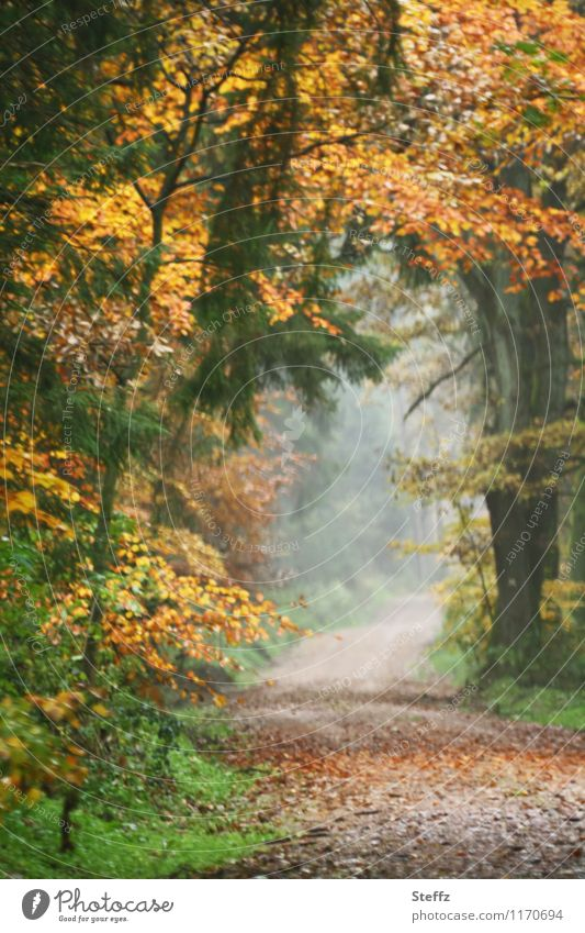 autumn gate Nature Autumn Fog Tree Leaf Autumn leaves Forest Automn wood Footpath Lanes & trails Beautiful Calm Sense of Autumn Misty atmosphere