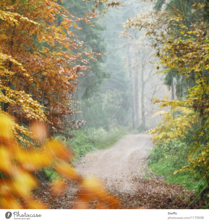 Autumn Gate II Nature Landscape Fog Tree Leaf Autumn leaves Forest Automn wood Footpath Lanes & trails Beautiful Yellow Calm Sense of Autumn Misty atmosphere