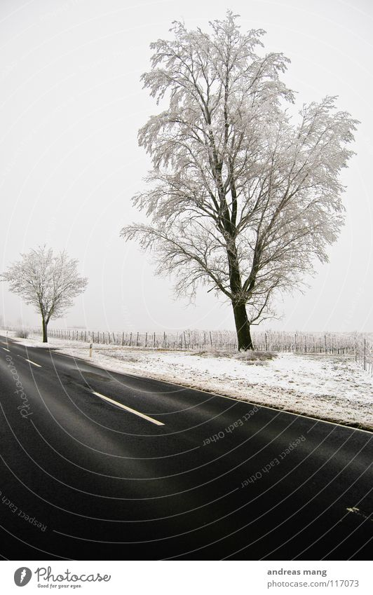 Nature White Tree Winter Black Loneliness Far-off places Street Cold Snow Landscape Field Empty Gloomy Branch Hoar frost