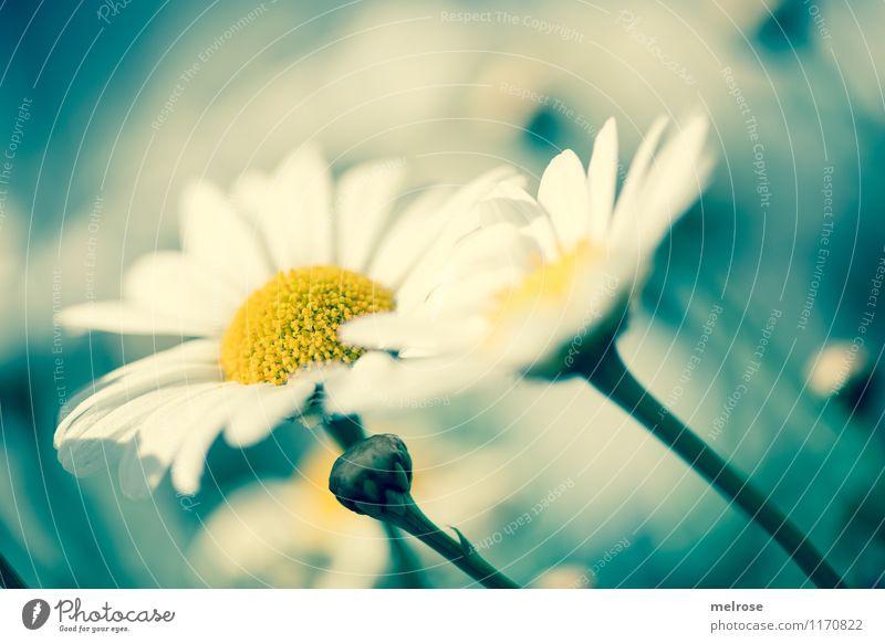 Plant Beautiful White Flower Relaxation Yellow Blossom Spring Style Garden Friendship Dream Design Illuminate Elegant To enjoy