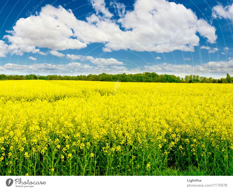 Nature Blue Plant Relaxation Yellow Natural Field Beautiful weather Agricultural crop
