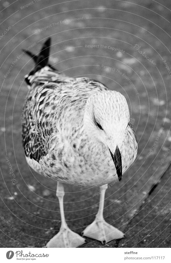 White Summer Black Loneliness Sadness Air Feet Bird Aviation Dangerous Wing Floor covering Grief Cute Feather Concentrate
