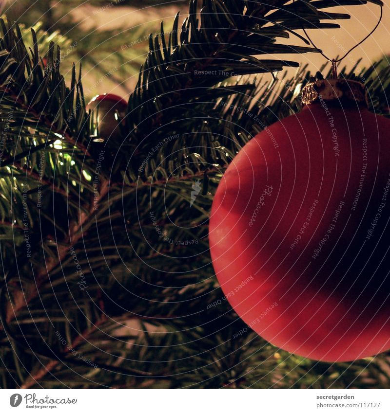 Nature Christmas & Advent Green Red Dark Warmth Emotions Interior design Lighting Feasts & Celebrations Art Brown Moody Room Decoration Branch