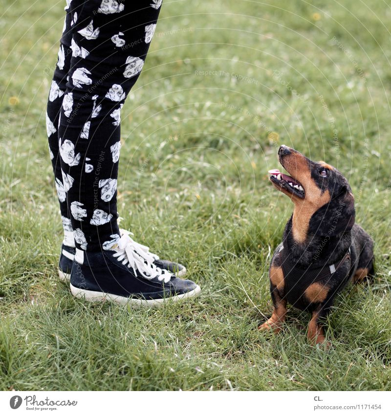 dog meets pants Playing Human being Feminine Adults Life Legs Feet 1 Grass Meadow Fashion Pants Sneakers Animal Pet Dog Animal face Dachshund Observe Happiness