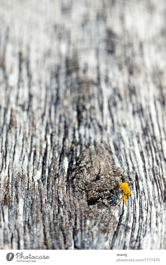 Orange-yellow paté Moss Wooden board Knothole Annual ring Old Dark Disgust Creepy Patina Decline Washed out Hideous End Colour photo Subdued colour