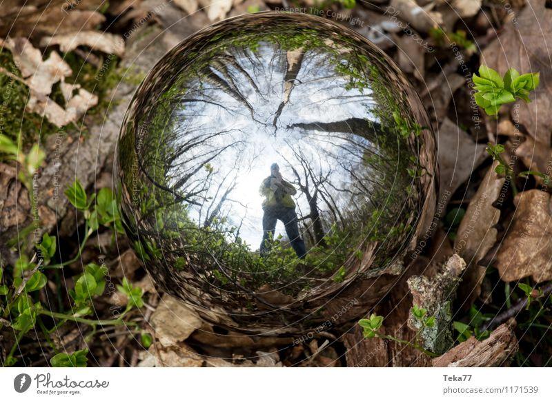 Nature Plant Landscape Forest Environment Grass Field Esthetic Moss