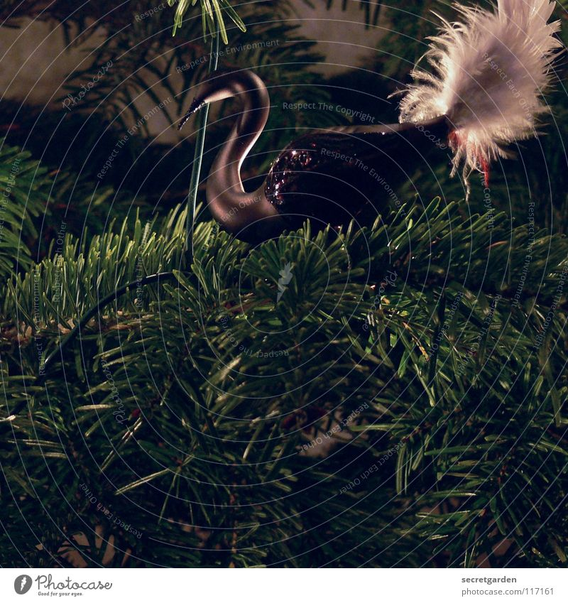 Yoo-hoo, it's christmas again! Swan Dark Black Animal Bird Graceful Fir tree Fir needle Green Physics White Soft Christmas decoration Jewellery Moody Emotions