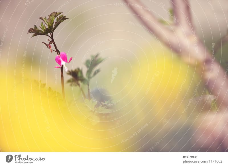 Plant Beautiful Green Tree Relaxation Loneliness Leaf Yellow Spring Blossom Garden Moody Brown Pink Dream Illuminate